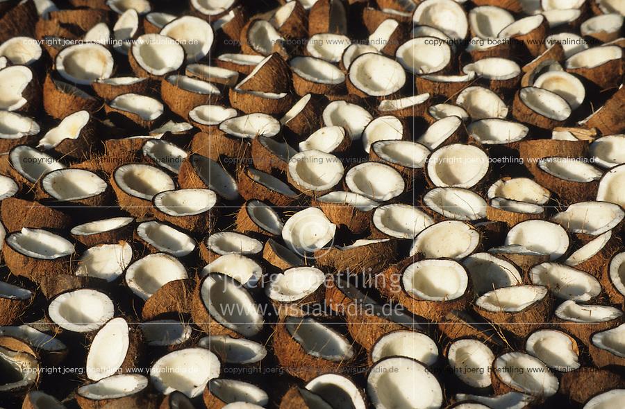 INDIA, Karnataka, Mangalore, drying coconut in sun, from coprah the dried meat of coconut kernel later coconut oil will be pressed / INDIEN Karnataka, Trocknung von Kokosnuessen in Sonne auf Plantage bei Mangalore, aus dem trocknen Kokosfleisch, Kopra, wird anschliessend Kokosoel gepresst