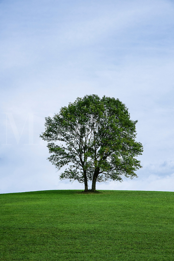 Lone tree on a hill, Stroud Preserve, Pennsylvania, USA