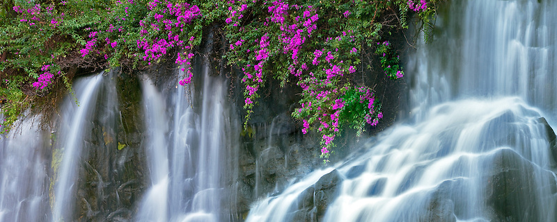 Waterfalls and flowers at the Grand Wailea Hotel. Maui, Hawaii.