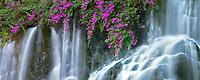 Waterfalls and flowers at the Grand Wailea Hotel. Maui, Hawaii.