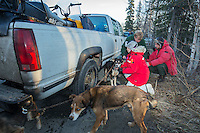 Volunteer veterinarians examine Zoya DeNure dogs at the 2016 Iditarod Pre-race vet check in Wasilla, Alaska. March 02, 2016 <br /> <br /> © Jeff Schultz/SchultzPhoto.com ALL RIGHTS RESERVED<br /> DO NOT REPRODUCE WITHOUT PERMISSION