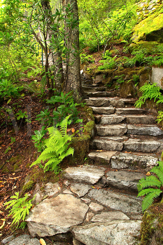 Stone stairs climbing through trees and ferns, Ladder Creek Falls Trail, Newhalem, Seattle City Light Company, Ross Lake National Recreation Area, Whatcom County, Washington, USA