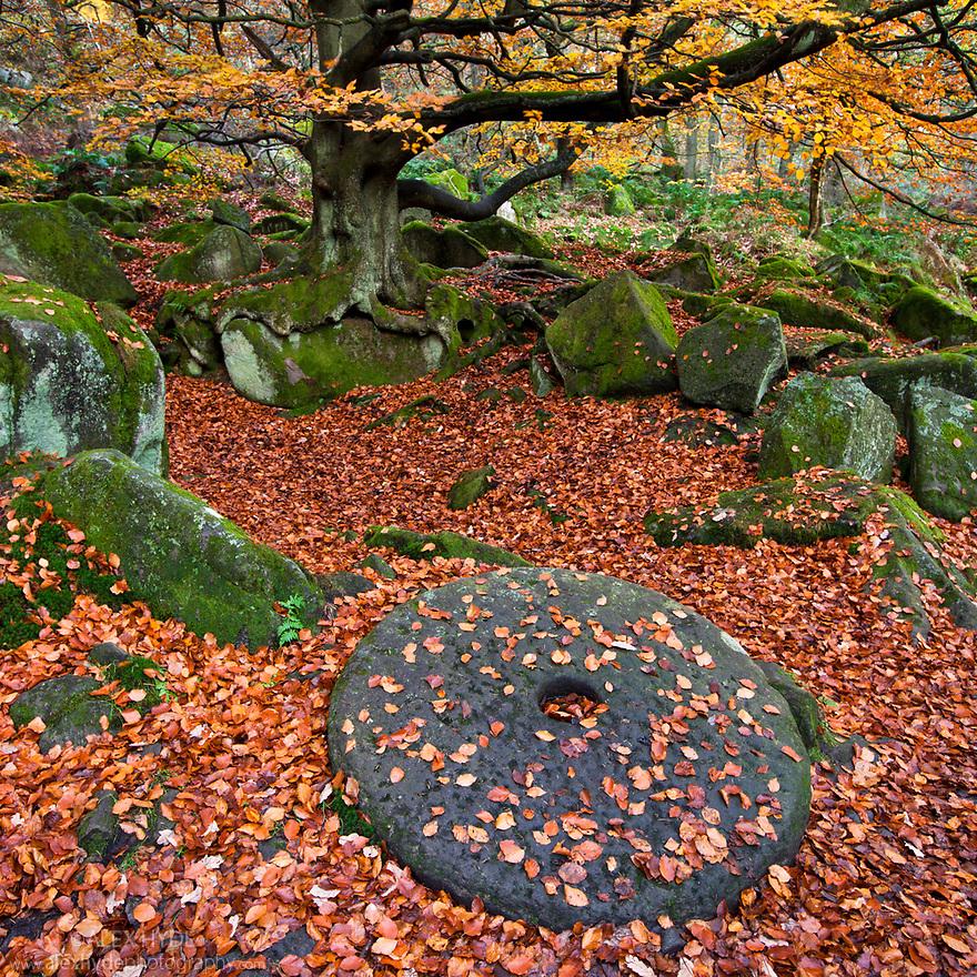 Millstone surrounded by fallen beech leaves. Padley Gorge, Peak District National Park, Derbyshire, UK. November 2010.
