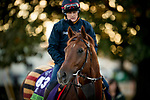 October 29, 2018 : Lightning Spear (GB), trained by David Simcock, exercises in preparation for the Breeders' Cup Mile  at Churchill Downs on October 29, 2018 in Louisville, Kentucky. Evers/ESW/CSM