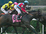Harmonize (no. 8), ridden by John Velazquez and trained by William Mott, wins the 22nd running of the grade 3 Glens Falls Stakes for fillies and mares three years old and upward on September 02, 2017 at Saratoga Race Course in Saratoga Springs, New York. (Bob Mayberger/Eclipse Sportswire)