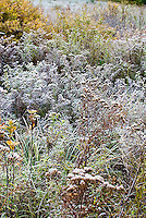 Frost on tall grasses<br />