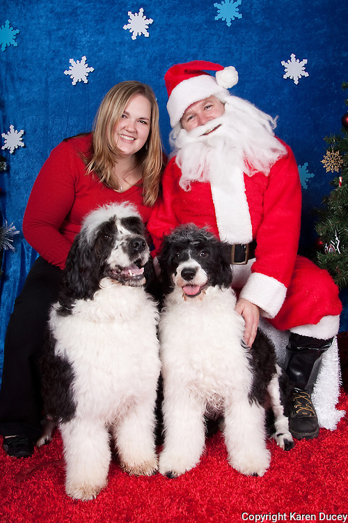 Dogs are photographed with Santa at a fundraiser for Dogs Deserve Better at Pet Pros in Redmond, WA on December 12, 2010. (photo by Karen Ducey)Angela's Portuguese water dogs are photographed with Santa at a fundraiser for Dogs Deserve Better at Pet Pros in Redmond, WA on December 12, 2010. (photo by Karen Ducey)