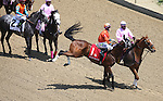 LOUISVILLE, KY - MAY 06: Marquee Miss #1, ridden by Channing Hill, kicks her hind legs during the post parade before the Eight Belles race on May 6, 2016 in Louisville, Kentucky.. (Photo by Joan Fairman Kanes/Eclipse Sportswire/Getty Images)