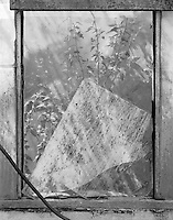 """""""Broken Glass Pane"""" <br /> Gibson Greenhouses, Maryville, Tennessee<br /> <br /> Light streamed through the greenhouse to illuminate this broken pane of glass as it rested peacefully. The scene looks quite good in a black & white photograph."""