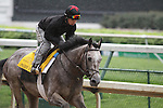 Paddy O'Prado works over a sloppy track at Churchill Downs in preparation for The Kentucky Derby. 04.27.2010