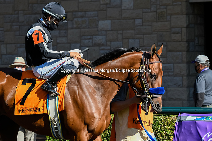 November 7, 2020 : Merneith, ridden by Luis Saez, walks the paddock before the Qatar Fort Springs Stakes on Breeders' Cup Championship Saturday at Keeneland Race Course in Lexington, Kentucky on November 7, 2020. Jessica Morgan/Breeders' Cup/Eclipse Sportswire/CSM