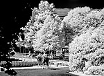 June 19, 2020: Horses come on to the track to train for the Belmont Stakes at Belmont Park in Elmont, New York. (Image made with a modified infrared sensor camera) Scott Serio/Eclipse Sportswire/CSM