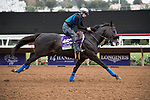 DEL MAR, CA - NOVEMBER 02: Midnight Storm, owned by Venneri Racing Inc. & Little Red Feather Racing and trained by Philip D'Amato, exercises in preparation for the Breeders' Cup Las Vegas Dirt Mile  during morning workouts at Del Mar Thoroughbred Club on November 2, 2017 in Del Mar, California. (Photo by Michael McInally/Eclipse Sportswire/Breeders Cup)
