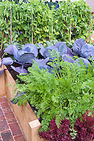 Peas, blue cabbage, carrots, red lettuce growing in raised garden vegetable bed, brick path