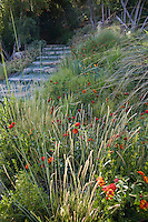California front yard meadow garden with drought tolerant red lantana and Sesleria autumnalis (Moor grass), Nassella tenuissima (rear)
