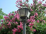 A lamp in Seville, Spain.