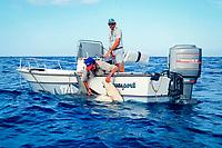 Dr. Samuel H. Gruber (U. Miami) injects a great hammerhead shark, Sphyrna mokarran, with oxytetracycline to mark growth rings in vertebrae for age/growth study, Bahamas, Caribbean Sea, Atlantic Ocean