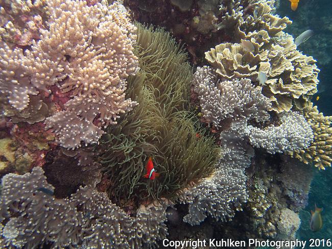 Marine Protected Area, Bohol Philippines 2016