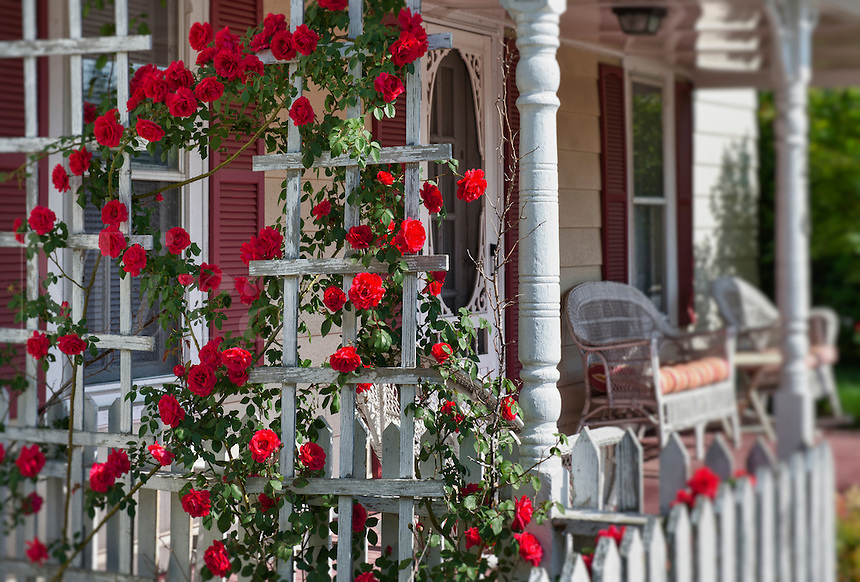 Red roses and victorian porch.