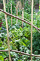 A densely planted vegetable plot that includes beetroot, spinach, pak choi, kohlrabi, lettuces, carrots, and mangetout peas, mid June.