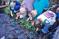 Fifth grade students viewing aquatic insects at Cascade Science School, Oregon