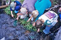 Fifth grade students viewing aquatic insects at Cascade Science School, Oregon