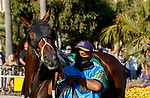 DEL MAR, CA  AUGUST 1: #5 Cover Version, ridden by Kyle Frey, in the paddock before the Clement L. Hirsch Stakes (Grade 1) Breeders Cup Win and You're In Distaff Division on August 1, 2021 at Del Mar Thoroughbred Club in Del Mar, CA.