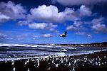 Flock of gulls in foreground of Seaside beach, Oregon