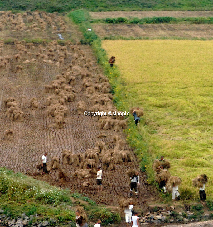"""Farmers in the North Korean country-side. North Korea is one of the last great dictatorships where, """"Our Dear Leader"""" Kim-Jong-il and his father Kim Il-sung """"The Great Leader"""" are worshipped and there is complete control of people who are constantly reminded of the evil deeds of the the west and USA."""