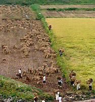 "Farmers in the North Korean country-side. North Korea is one of the last great dictatorships where, ""Our Dear Leader"" Kim-Jong-il and his father Kim Il-sung ""The Great Leader"" are worshipped and there is complete control of people who are constantly reminded of the evil deeds of the the west and USA."
