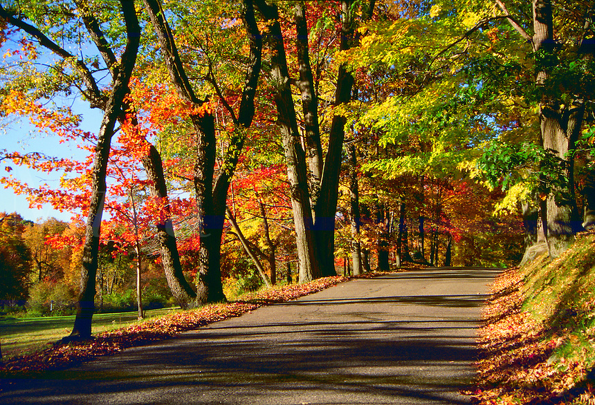 A quiet coutry road with fall foliage. Connecticut.