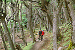 Hikers in Lenga (Southern Beech) forest, Lost Glaciares National Park, Argentina