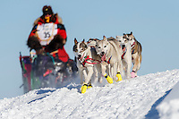 Alan Eischens and team run down an ice bank on the trail along the Tanana river between Fairbanks and Nenana during the 2017 Iditarod on Monday March 6, 2017.<br /> <br /> Photo by Jeff Schultz/SchultzPhoto.com  (C) 2017  ALL RIGHTS RESVERVED