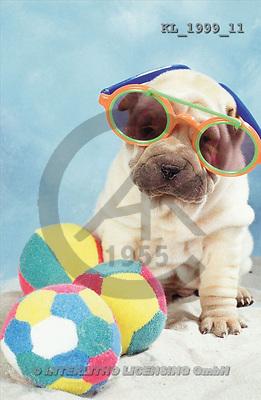 Interlitho, Alberto, ANIMALS, dogs, photos, shar pei, 3 balls(KL1999/11,#A#) Hunde, perros