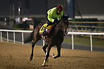 DUBAI,UNITED ARAB EMIRATES-MARCH 23: Opal Tiara,trained by Mick Channon,exercises in preparation for the Dubai Turf at Meydan Racecourse on March 23,2017 in Dubai,United Arab Emirates (Photo by Kaz Ishida/Eclipse Sportswire/Getty Images)