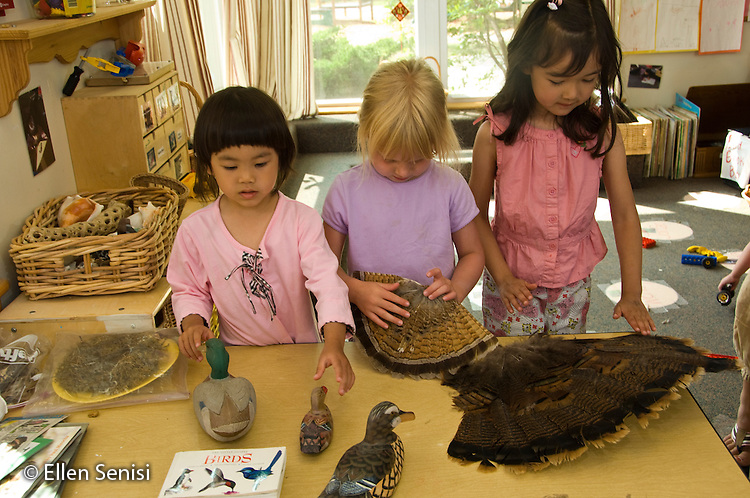 MR / College Park, Maryland.Center for Young Children, laboratory school within the College of Education at the University of Maryland. Full day developmental program of early childhood education for children of faculty, staff, and students at the university..Student (left; girl, 4, Taiwanese American, center; girl, 3, right; girl, 4) handles objects at science learning center about birds. .MR: Tse1 Lit1 Hei3.© Ellen B. Senisi