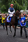 Siyouma (IRE)(3) with Jockey Gerald Mosse aboard at Pattison Canadian International  in Toronto, Canada on October 14, 2012.