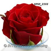 Gisela, FLOWERS, BLUMEN, FLORES, photos+++++,DTGK2366,#F#, EVERYDAY