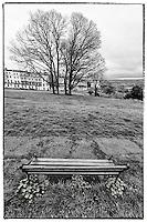 Tree and bench near Clifton Suspension Bridge, Bristol.