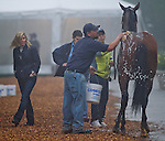 May 15, 2014: Kid Cruz gets a bath as trainer Linda Rice, far left, inspects him during morning preparations for the Preakness Stakes at Pimlico Race Course in Baltimore, MD. Scott Serio/ESW/CSM