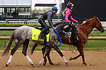 LOUISVILLE, KY - APRIL 23: Creator (Tapit x Morena, by Privately Held) is ponied on track, ridden by exercise rider Abel Flores at Churchill Downs, Louisville KY, in preparation for the Kentucky Derby. Owner WinStar Farm LLC, trainer Steven M. Asmussen. (Photo by Mary M. Meek/Eclipse Sportswire/Getty Images)