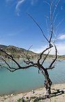 ESP, Spanien, Andalusien, Provinz Cádiz, bei Zahara de la Sierra: abgestorbene Baeume im Stausee Embalse de Zanara Gastor | ESP, Spain, Andalusia, Province Cádiz, near Zahara de la Sierra: dead trees at reservoir Embalse de Zanara Gastor