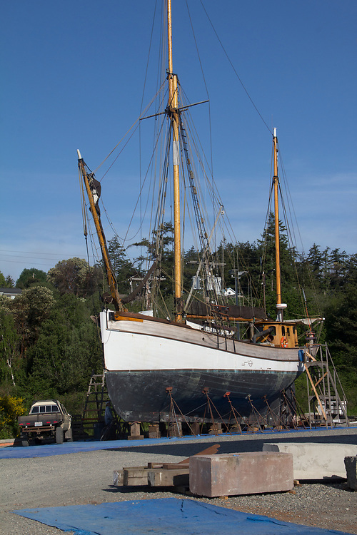 Port Townsend, Baltic ketch, Lady Hawk, on the hard, fishing boat, Boat Haven Marina, Jefferson County, Olympic Peninsula, Washington State, Pacific Northwest, USA,