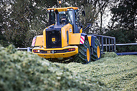 Loading forage maize into a clamp for anaerobic digestion - October, Lincplnshire