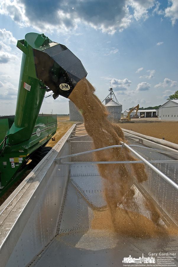 Winter wheat is off-loaded into a truck for movement to storage bins on the first days harvest of more than 900 acres of winter wheat in a field near Delaware, Ohio, Friday, June 30, 2006. Beginning just a few days earlier than the traditional start of winter wheat harvest on July 4, the farmer said the prices for early wheat were higher than normal and worth the early start.<br />
