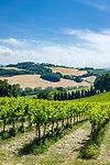Italien, Marken, bei Fiorenzuola di Focara: Weinberge an der Strada Panoramica del San Bartolo (SP44) im Parco Naturale Monte San Bartolo, wenige Kilometer suedlich von Cattolica (Emilia-Romagna) | Italy, Marche, near Fiorenzuola di Focara: vineyards at Strada Panoramica del San Bartolo (SP44) at Parco Naturale Monte San Bartolo, a few kilometers south of Cattolica (Emilia-Romagna)