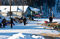 Mushers busy at the village checkpoint of Ruby in Interior Alaska during the 2010 Iditarod