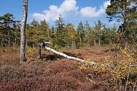 Haspelmoor, Haspel-Moor, Naturschutzgebiet, Bayern, Deutschland