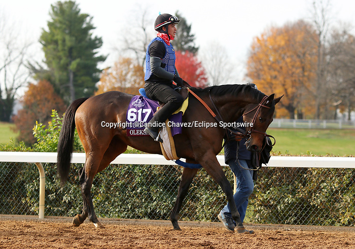Oleksandra, trained by trainer Neil D. Drysdale, exercises in preparation for the Breeders' Cup Turf Sprint at Keeneland Racetrack in Lexington, Kentucky on November 5, 2020.