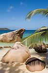 Seychelles, Island Praslin, Anse Takamaka: beach, granite rocks and palm tree